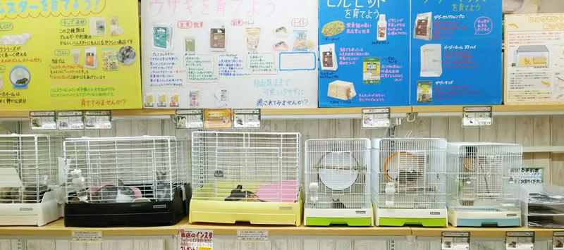 ホームセンターコーナン 徳島小松島店内ペットプラザ