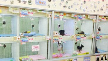 ホームセンターコーナン 三津浜店内ペットプラザ
